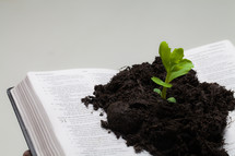 close-up soil and a plant growing from the pages of a Bible