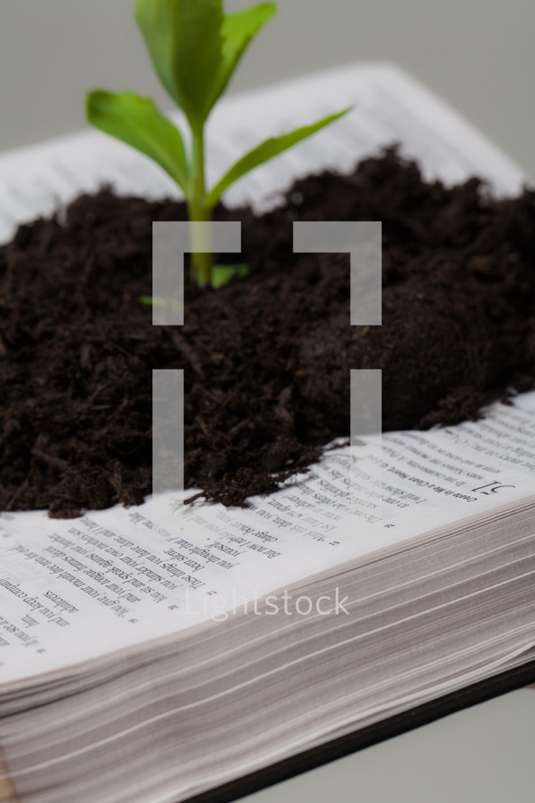 close-up of soil and a plant growing from the pages of a Bible