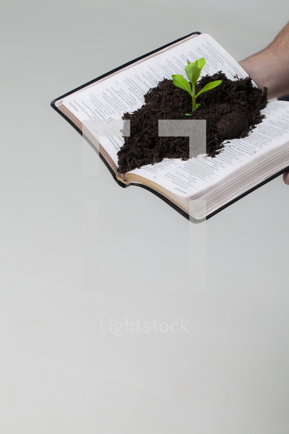 soil and a plant growing from the pages of a Bible