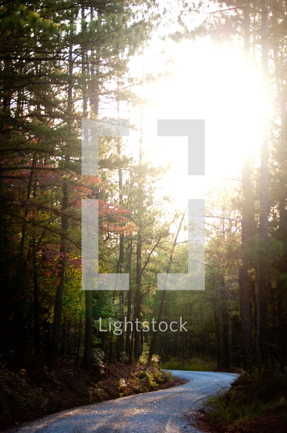 sunlight over a winding road through a fall forest