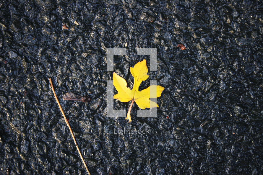wet fall leaf on asphalt