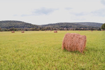 hay bales in an ope field