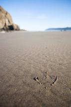 bird tracks on the sand