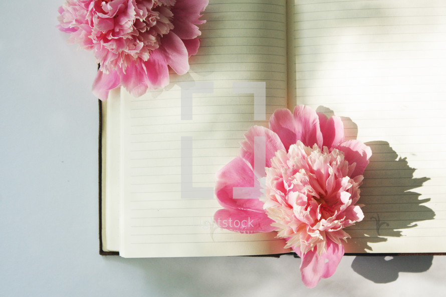 pink flowers on blank pages of a journal