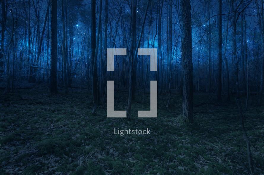 A forest under star light