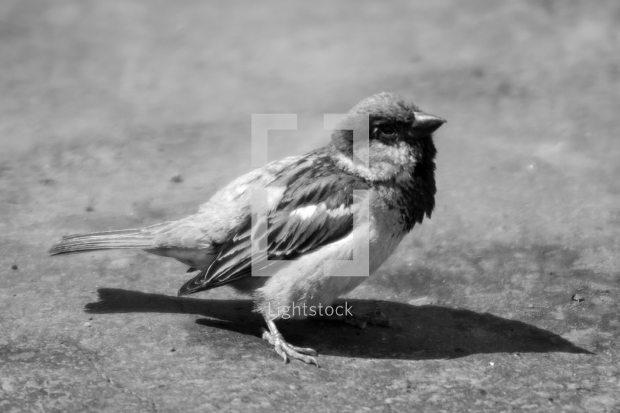 A small bird standing on the ground.