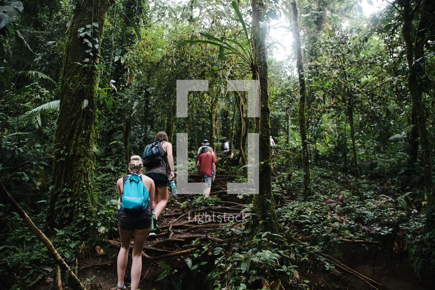 people hiking through a jungle