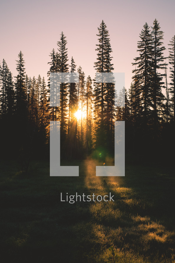 Forest Sunrise | Light Through Trees | Flare | New Day | New Beginning