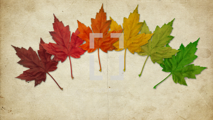 rainbow of fall leaves