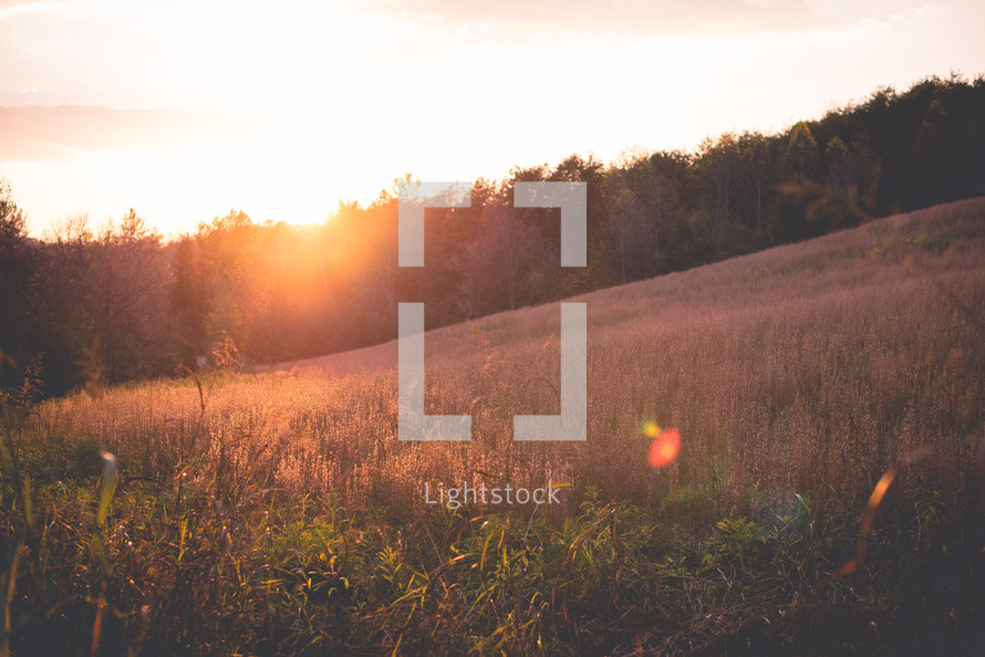 sunset over a field of tall grasses