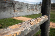 chewed on farm fence