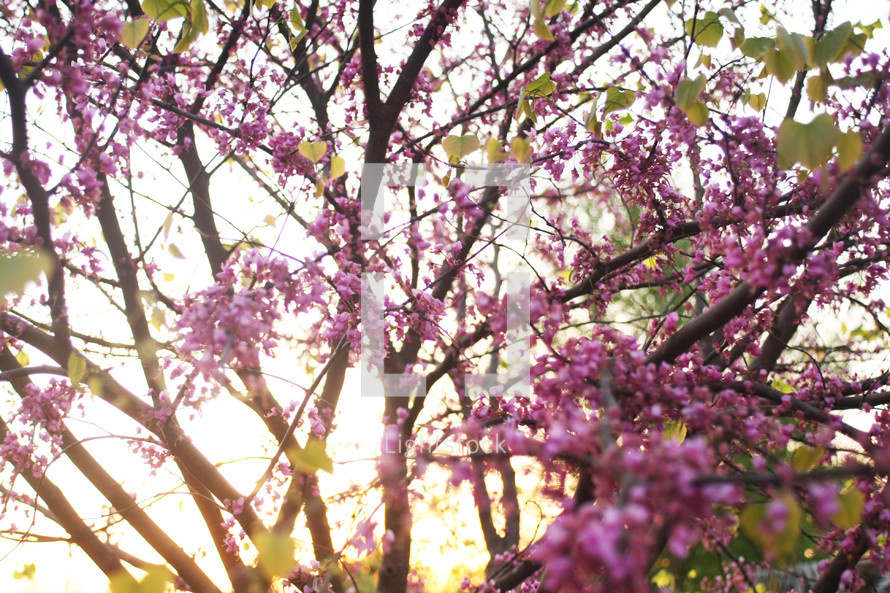 pink flowers on a tree