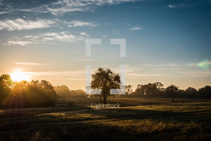 hay bales and tree on a pasture at sunrise