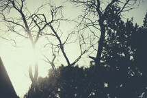 Sunshine through barren trees.