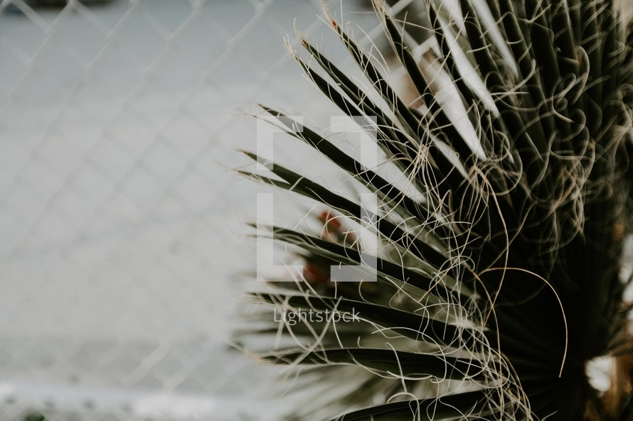 stringy fibers on a palm
