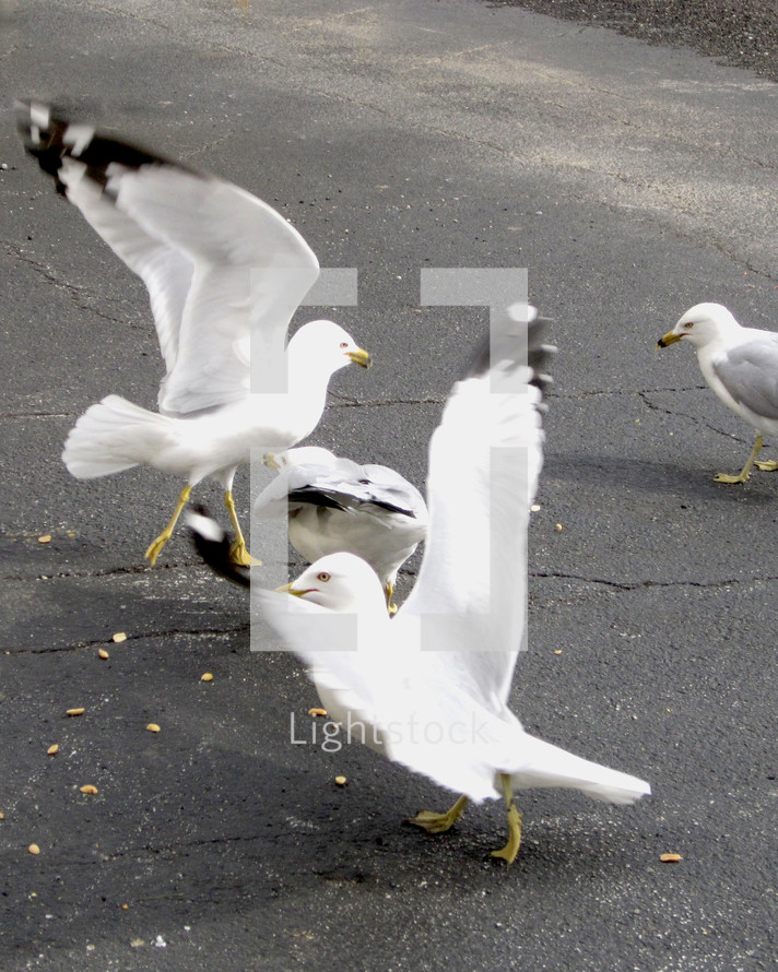 Seagulls scavenging scraps of food in a parking lot.