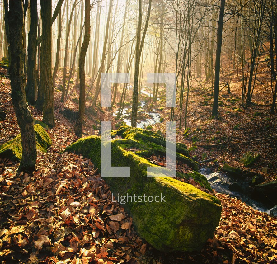 moss covered rock on the forest floor