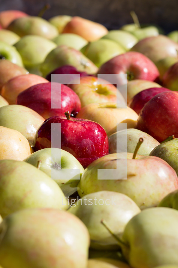 pile of red and yellow apples