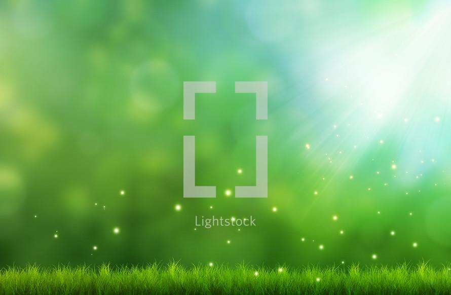 twinkling light over grass