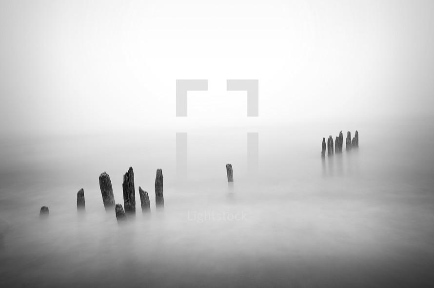 fog and stumps