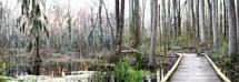 walkway through a marsh swamp
