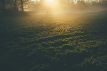 glow of morning sunlight on grass