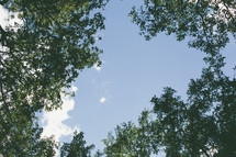 Ground view of clouds in blue sky surrounded by tree tops.