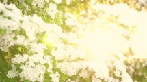 spring flowers in bright sunlight