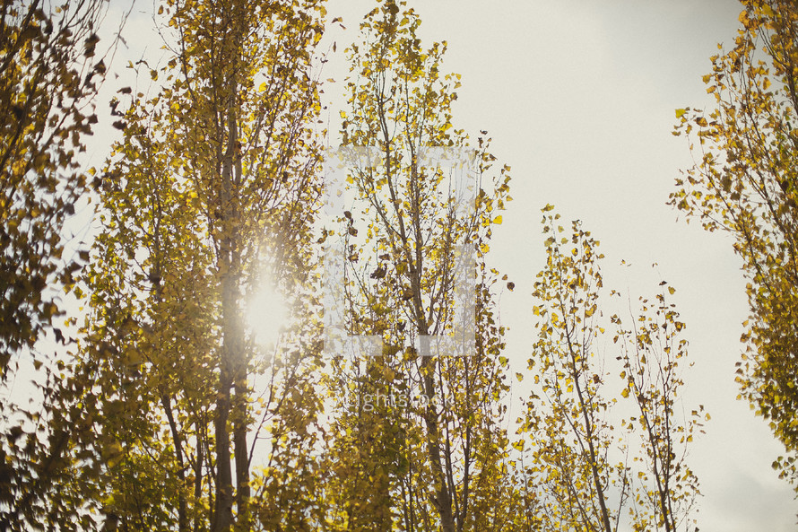 The sun shines through a group of trees.