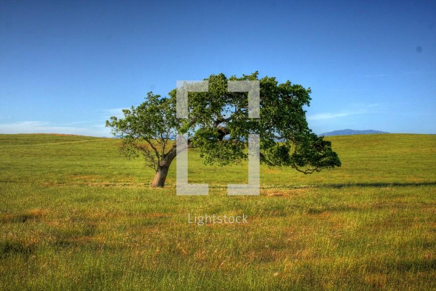 Tree in grass field