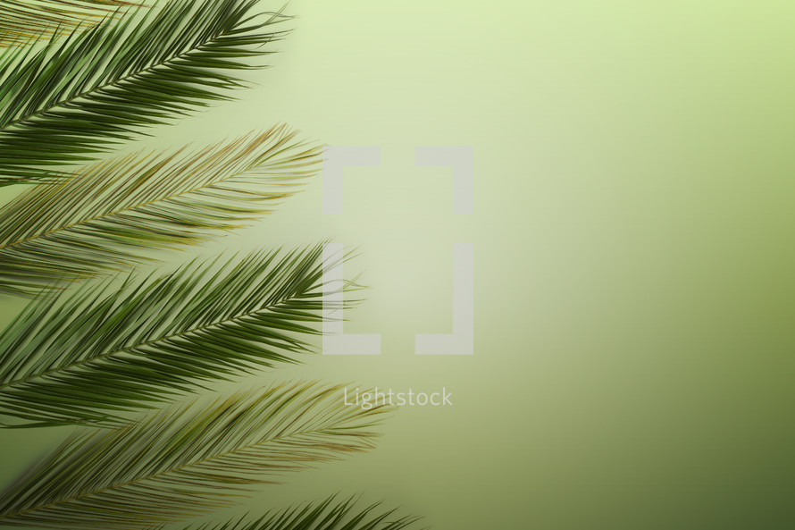 Palm branches for Palm Sunday on green background