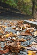 brown fall leaves on gravel