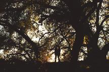 Couple embracing under large trees.