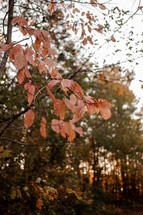 orange fall foliage