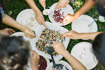 sorting beans and seeds