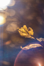 bokeh sunlight and fall leaf