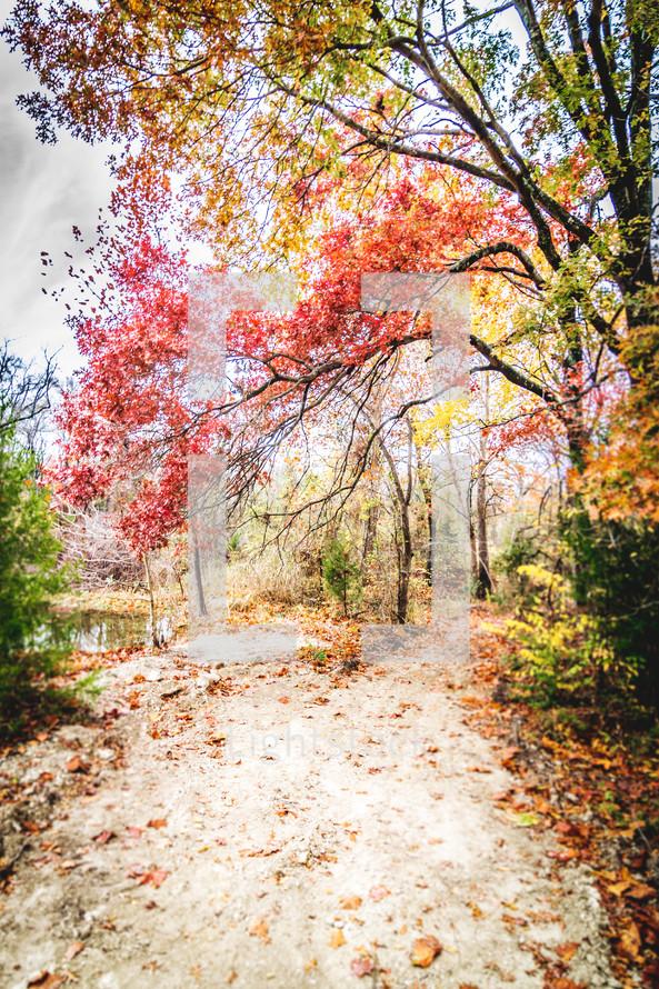 Fall foliage along a dirt trail.