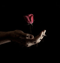 hand with thorns holding a rose in darkness