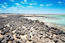 Stromatolites in a beach in Australia