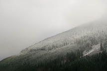 snow on a mountaintop forest