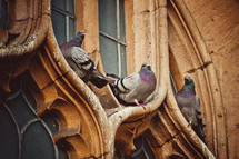 pigeons on a church window in Oxford
