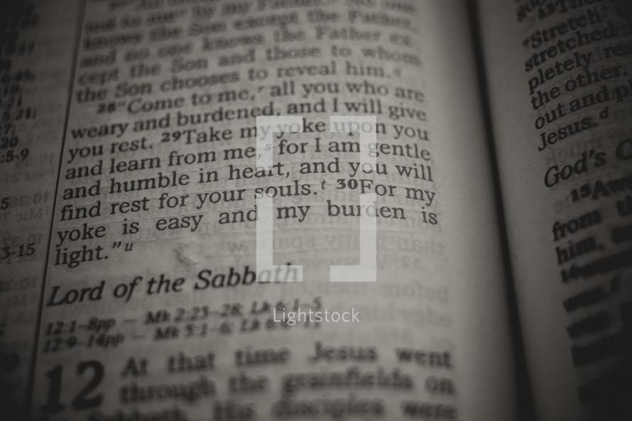 yoke  - Bible verse