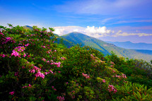 wildflowers growing on a mountaintop