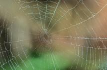 wet spider web