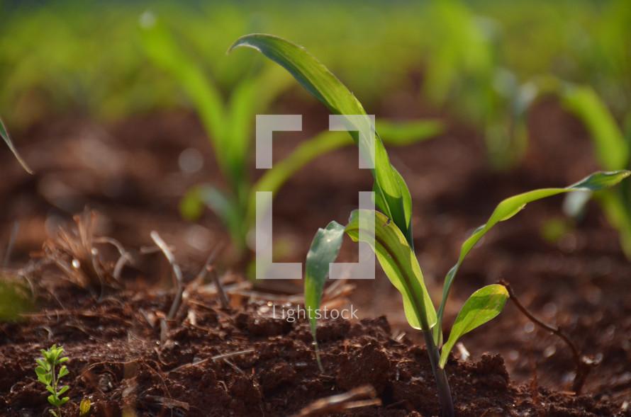 Plants in soil