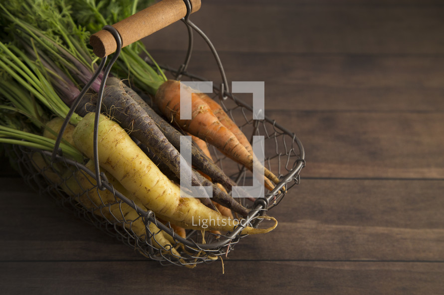 fresh picked carrots in a wire basket