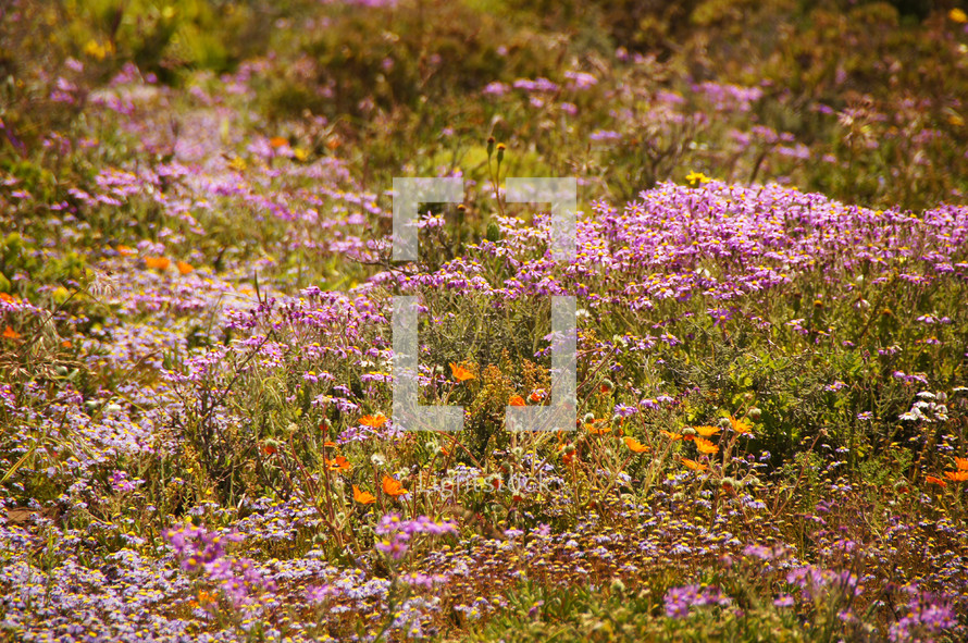 Open field of wild flowers