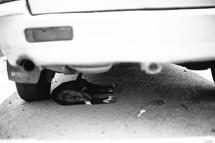dog sleeping under a truck