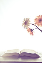 gerber daisies and an open Bible