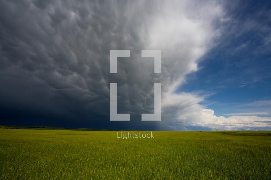 Storm clouds over grass field